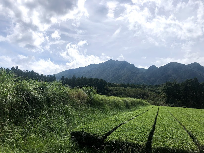 Tea fields of Hachimanju